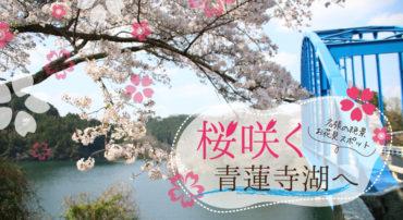 【名張でお花見散歩】青蓮寺の桜がキレイでした!
